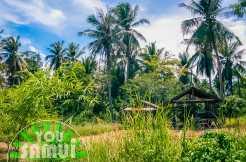 land-ban-thapo-l102