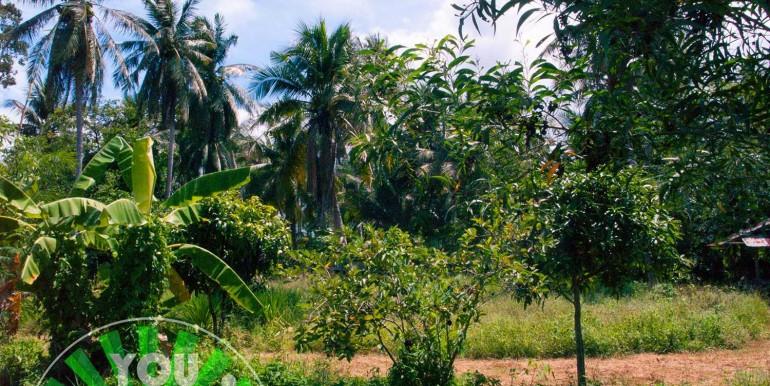 l102-land-ban-thapo-33